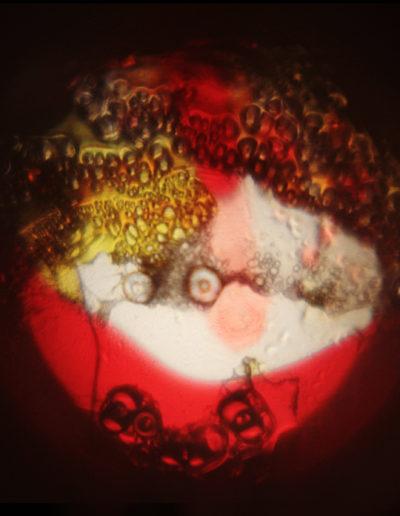 Mya Lurgo, CosmoMania Destinata IV, Vetrino, mixed media, oli colorati, lente d'ingrandimento, proiezione a soffitto o parete, Ø massimo 200 cm, 2006